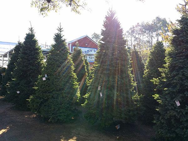 Warren 39 S Kingwood Santa Is Coming To Town Best Houston Garden Center Kingwood Tx Warren 39 S