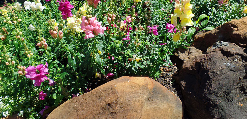 I Want A Flower Bed Now What Part 1 Warren S Southern Gardens