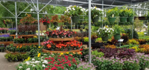 garden center in kingwood tx