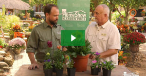 Fall Annuals Video